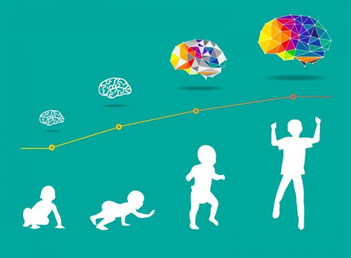 graphic representing brain development from a baby to a child